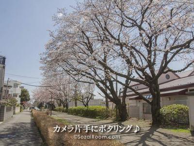 水道道の中の桜並木