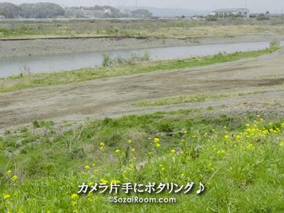 相模川の河原