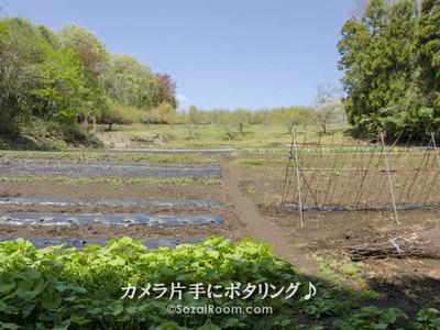 七国山の畑