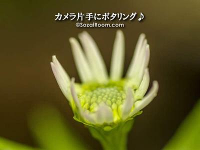 しべに滴がたまった花