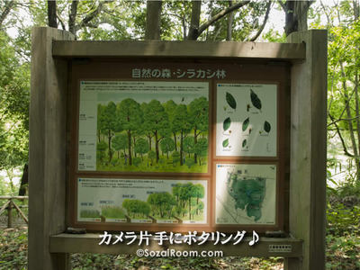 自然の森・シラカシ林