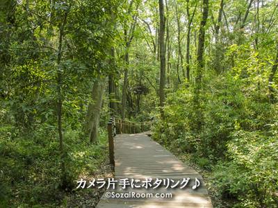 木々がたくさんある木道