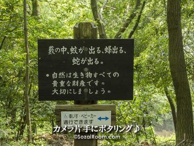 森の小道の中の看板