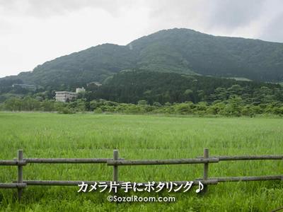 箱根湿生花園から仙石原方面を望む