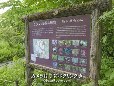 箱根湿性花園の案内看板