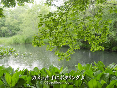 水芭蕉の池