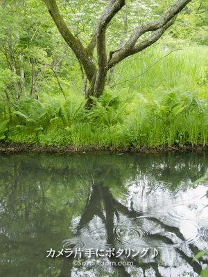 池に映る樹木