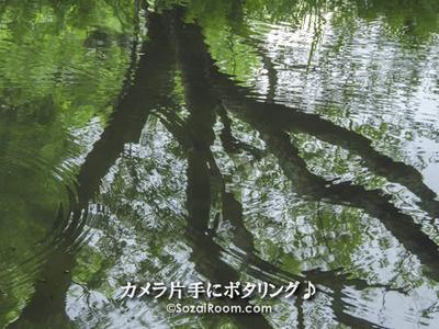 池に映り込む樹木